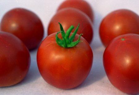 томат белый налив описание сорта и характеристики фото