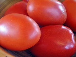 tomat-zemlyak-foto