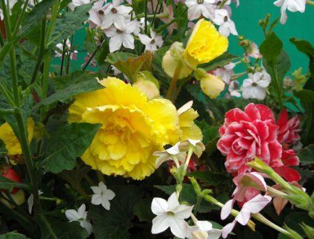 Цветы для альпийских горок