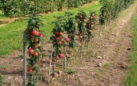 Когда лучше сажать саженцы плодовых деревьев весной или