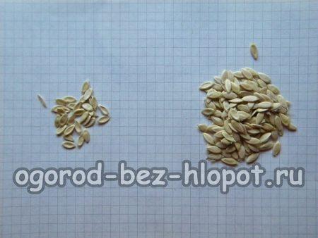 Отбраковать нехорошие семена огурцов