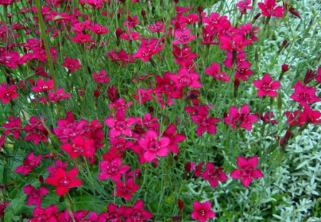Цветы для альпийских горок многолетние: фото с