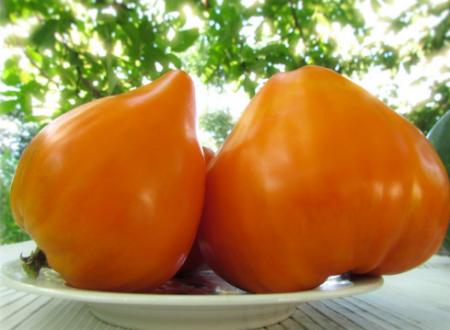 Семена томатов: самые урожайные сорта на 2020 год