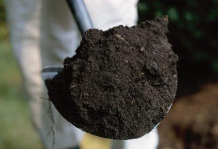 Чернозем на даче – плюсы и минусы