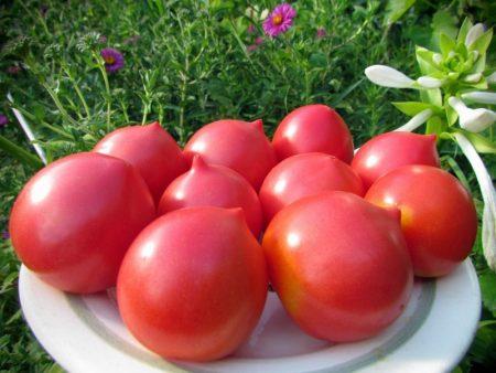 Урожайные семена томатов Cибирской селекции