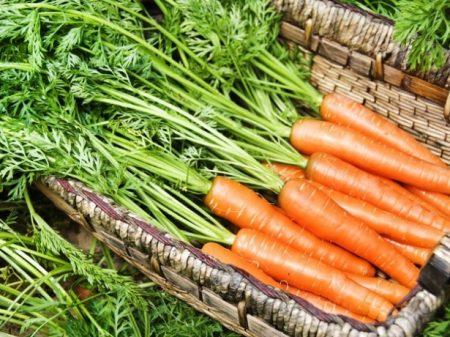 Когда убирать морковь с грядки для зимнего хранения