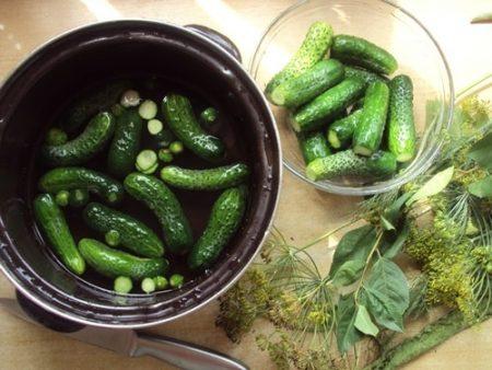 Малосольные огурцы, рецепт быстрого приготовления в кастрюле