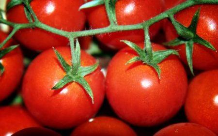 низкорослые урожайные помидоры