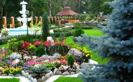 Цветы для альпийских горок многолетние: фото с названиями