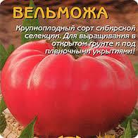 tomat-velmozha-otzyvy-i-foto