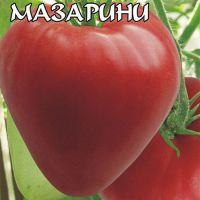 tomata-mazarini-otzyvy-foto-kto-sazhal