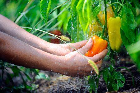 Что сажать после моркови на следующий