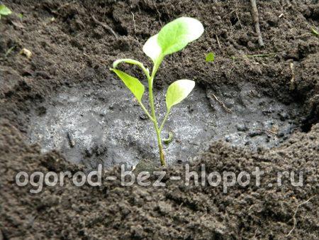 Мокрой землей уплотните основание куста