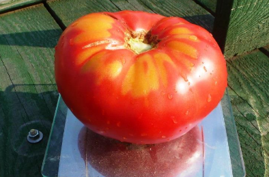 Cемена томатов от коллекционеров на 2017 год