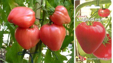 tomat-mazarini-2