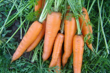 Что сажать после моркови на следующий год