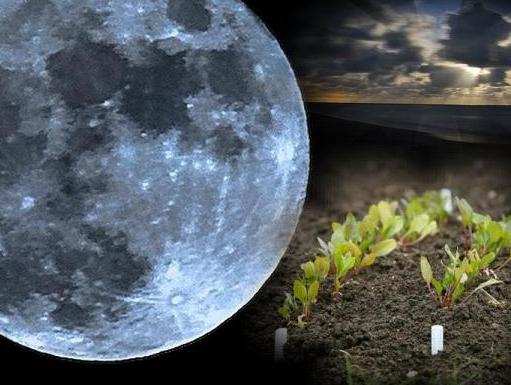 Лунный посевной календарь садовода и огородника 2017 года, таблица