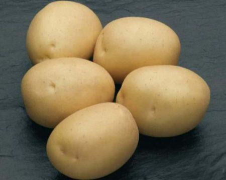 Картофель Наташа: описание сорта, фото, отзывы