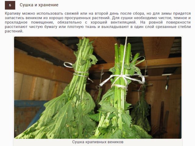 Веник из крапивы для бани — Справочная информация по банным печам, водогрейным котлам и печам калориферам.
