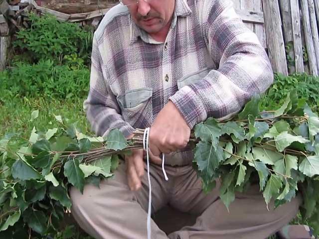Березовый веник для бани - как правильно заготавливать, сушить и запаривать веник?