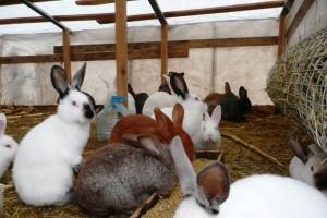 Кормление кроликов в домашних условиях для начинающих 659