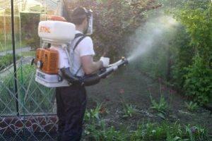 Как и чем обработать теплицу из поликарбоната осенью от вредителей и болезней: подготовка к зиме, чем мыть и обеззараживать