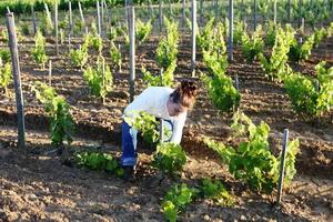 Осенняя подкормка винограда осенью