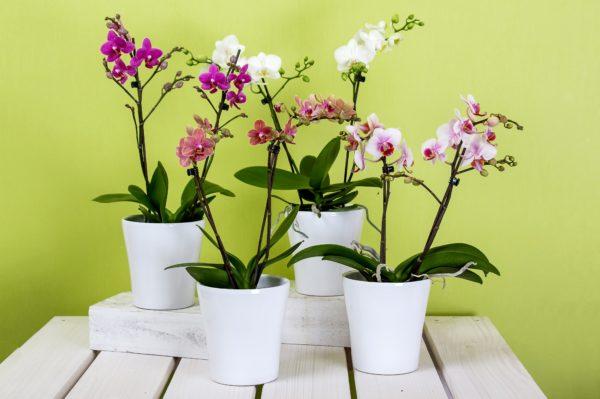Надо ли обрезать желтые листья у орхидеи