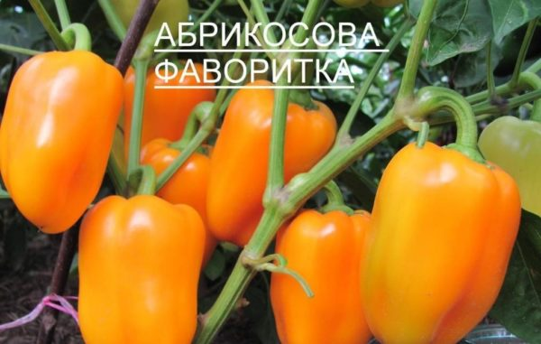 Перец абрикосовая фаворитка