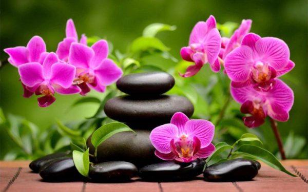 Посадка фаленопсиса и уход за растением, как укоренить орхидею без корней в домашних условиях и сделать тепличку для цветка своими руками?