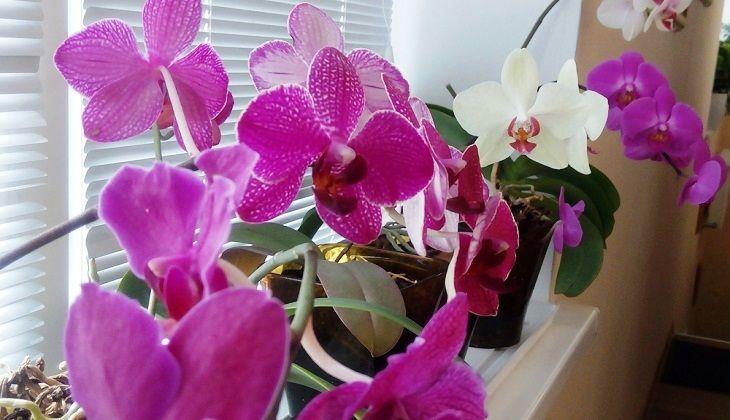 Как выявить негативные факторы и болезни орхидеи