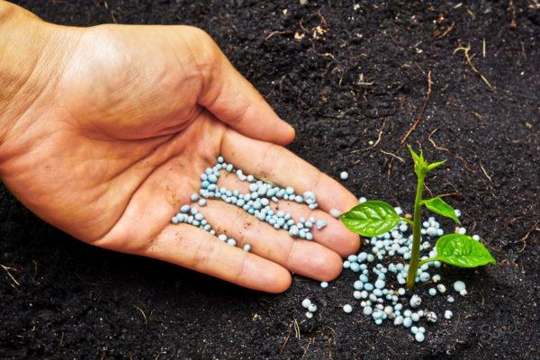 Удобрение сульфат аммония применение на огороде