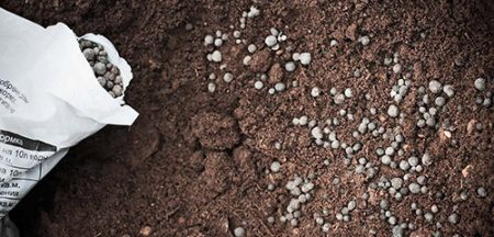 Правильная внекорневая подкормка кустов картофеля