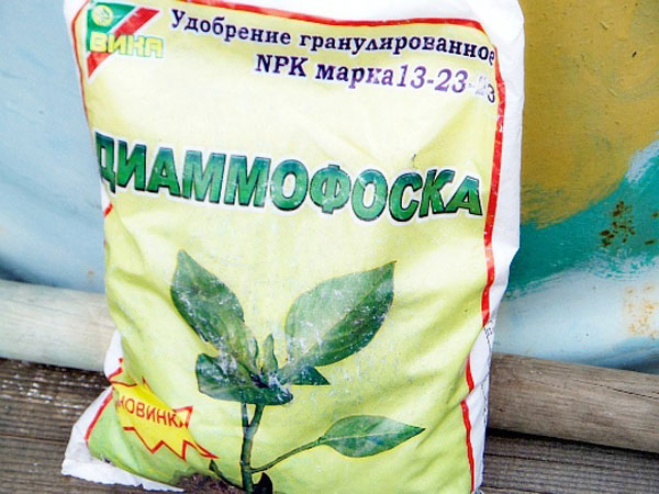 Диаммофоска: состав и характеристика удобрения, применение на огороде