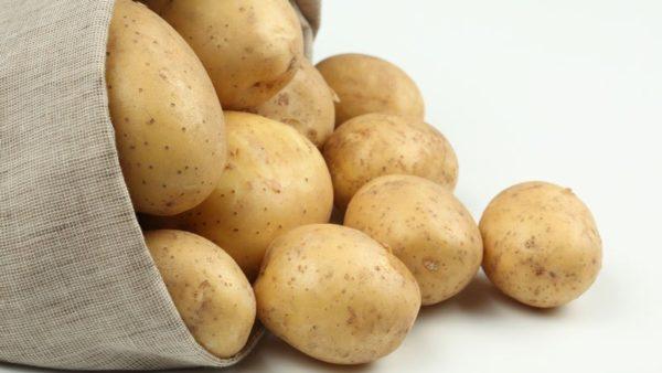 Картофель невский описание сорта фото отзывы