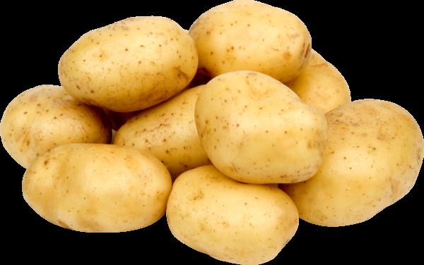 Подробоне описание и характеристики сорта картофеля Адретта