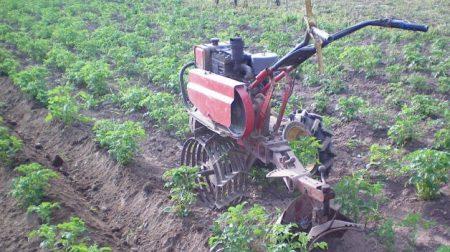 Как быстро прополоть картошку триммером мотоблоком и другими приспособлениями
