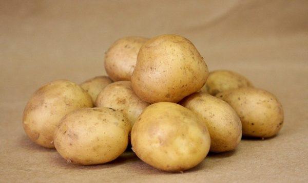 Картофель Удача — описание сорта и правила ухода