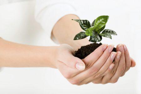 Что относиться к фосфорным удобрениям их виды и названия