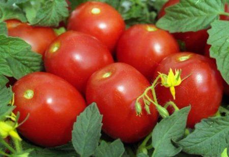 Томат новичок (розовый): описание сорта, фото плодов, отзывы фермеров об урожайности и выращивании помидоров