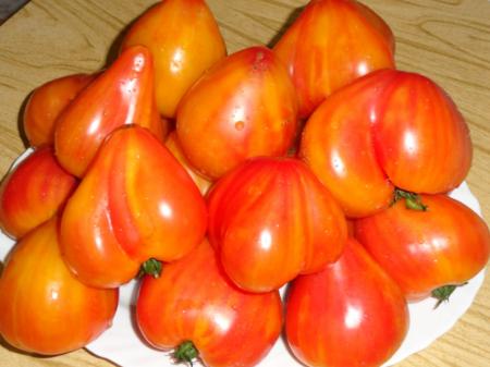 Томат Оранжевый русский характеристика и описание сорта его урожайность с фото