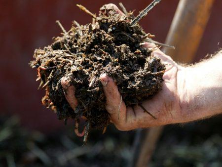 Можно подсыпать землю в рассаду перцев
