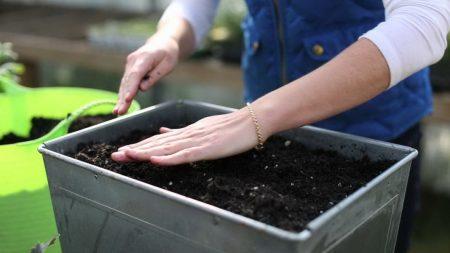 Выращивание рассады перца в домашних условиях без пикировки