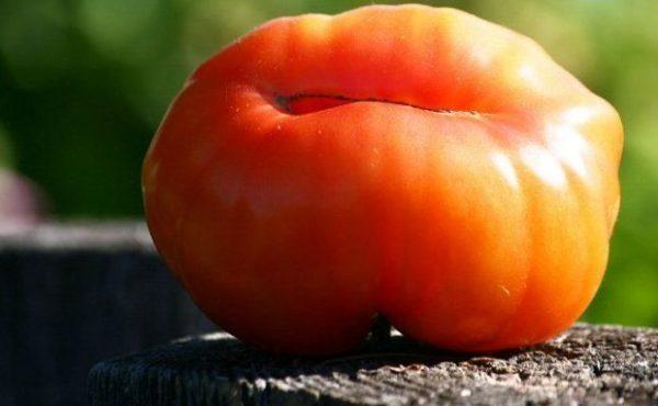 Описание томата Драгоценность и выращивание своими руками