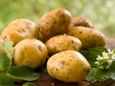 Сеникация и десикация картофеля что это когда проводить и как применять