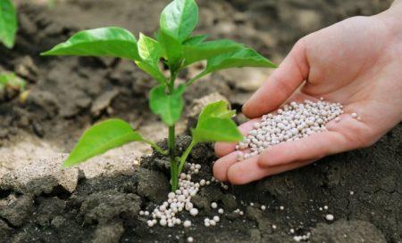 Азбука подкормок: фосфорные удобрения