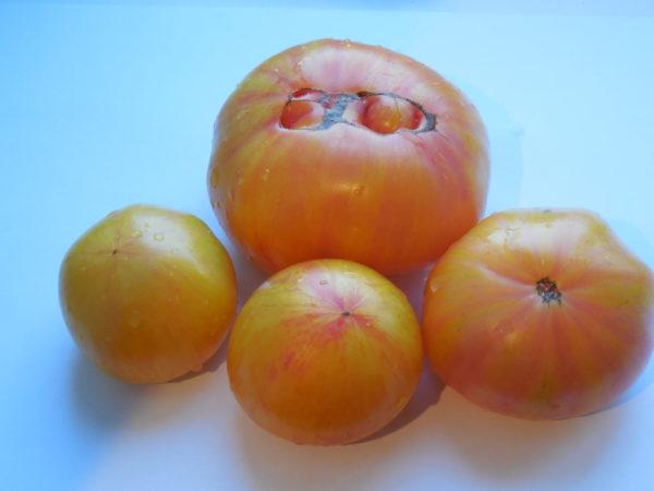 Томат Большой полосатый кабан: характеристика и описание сорта, урожайность с фото