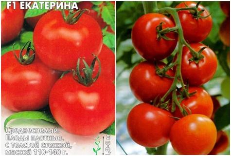 Томат Екатерина: характеристики и описание сорта, урожайность, отзывы, фото