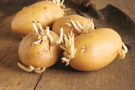Как прорастить картофель в домашних условиях