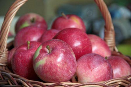 Яблоня слава победителям описание сорта фото отзывы садоводов